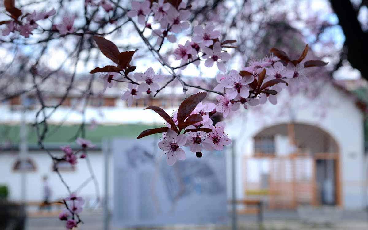 szállás Harkány tavaszi pihenés